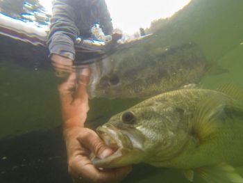 Don't get frustrated being in the back of a bass boat when fish are bedding and sight-casting is the ticket. Plenty of fish are still in range, moving into the same coves in slightly deeper water.