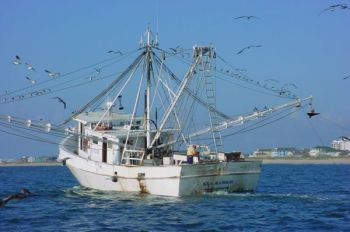 After a vote by the NCMFC, shrimp trolling in North Carolina's state waters appears to be limited.