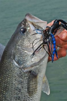 Jigs can be effective on Lake Wylie's winter bass, but that's not the only lure worth trying this time of year.