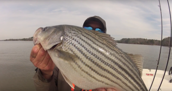 Dieter Melhorn shows off a typical winter striper for Lake Wateree.