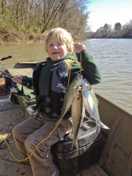 Hickory shad will run up the Neuse River in March and April, coming in range of plenty of fishermen.