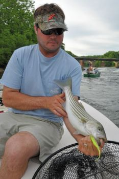 Guide Richard Andrews of Bath targets Roanoke River's striped bass this month with soft-plastic paddletail baits fished on leadhead jigs.