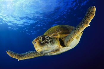 Learning about sea turtles is just one part of the N.C. Coastal Federation's annual Outdoors Day, which will be held April 19 in Currituck County.