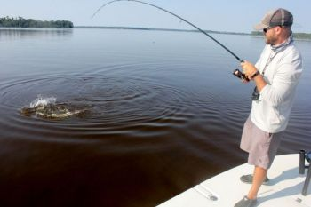 The Cape Fear River has the brackish conditions <br />
