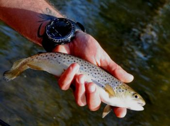 Periods of falling barometric pressure will encourage mountain trout like this brown to feed.