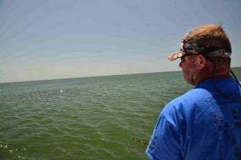 Plenty of menhaden schools get hemmed up in the hook inside Cape Lookout, setting up a buffet for hungry cobia and giving anglers armed with popping-cork rigs a good shot.