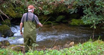 An angler fishes a North Carolina mountain stream that's not designated as a trout stream but can still hold plenty of trout.