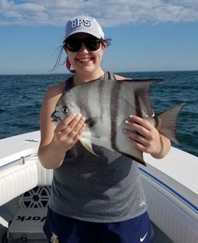 Spadefish are warm-weather visitors to the nearshore reefs off Georgetown, S.C.