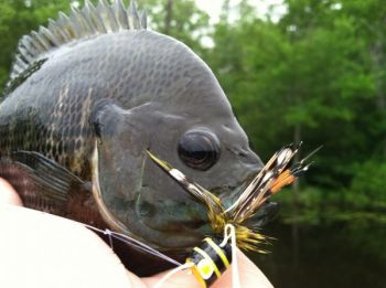 Fly rods, popping bugs and bluegill are summer staples for Carolinas anglers.