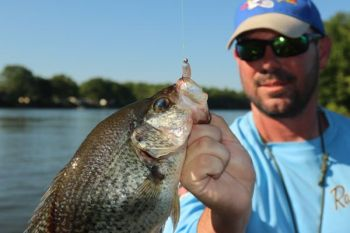 Watch the video to help you distinguish between white crappie and black crappie.