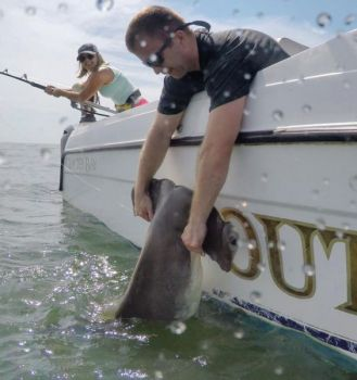 Sam Bush caught this hammerhead shark off the coast of Hilton Head while fishing with Outcast Sport Fishing Charters.
