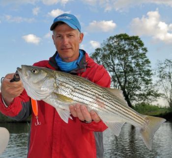 Scott Wood of Driftwood Charters shows why June is a great month for striper fishing on the Neuse River.