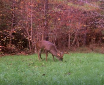 A blocky body, legs that appear short and a thick neck indicate a mature buck that's reached the shooter category.