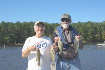 White perch have become established at Shearon Harris Lake, giving anglers another great option for summer fishing trips.