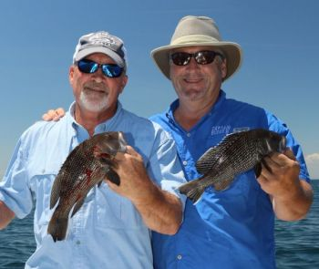 Take a quick survey on black sea bass to be entered to win a $100 gift card from Bass Pro Shops.