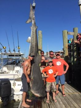 This 956-pound tiger shark won the 2017 Edisto Watersports and Tackle Shark Tournament on June 10.