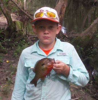 Colorful redbreast sunfish don't slow down their feeding habits just because it's hot. South Carolina's Lynches River is a great stream for a summer float.