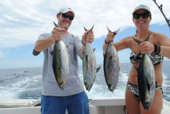 Since the yellowfin tuna virtually disappeared from these waters several years ago, blackfin tuna have been an important part of the Outer Banks fishing experience.