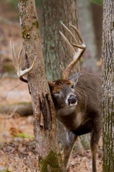 South Carolina's four game zones provide good hunting opportunities for a variety of species.