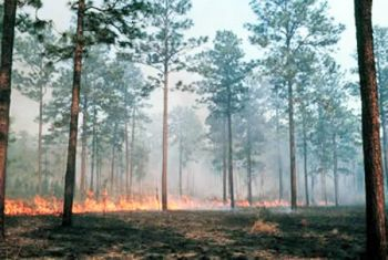 Prescribed fire, aka controlled burns, is a management tool to improve wildlife habitat, but wild fires may have provided some South Carolina mountain areas with similar results last fall.