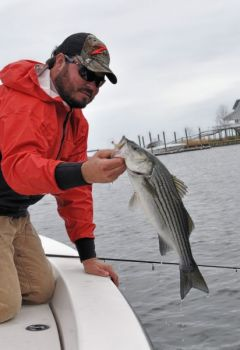 Guide Richard Andrews catches plenty of fall stripers in the Pamlico River.