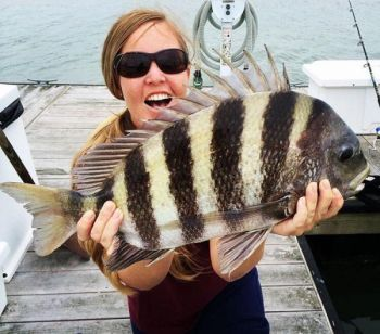 Darcy Hill catches plenty of fall sheepshead on oyster and clam meat around Charleston, S.C., partly because fiddler crabs get harder to find, and partly because they're productive baits.