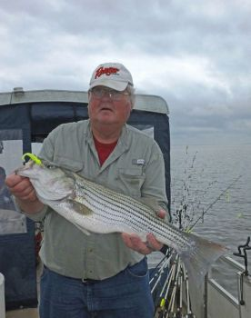 Guide Linwood Thornhill said he gets better results when he can find an isolated school of stripers away from other boats.