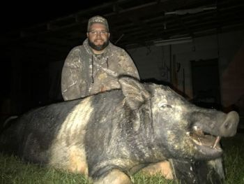 This trophy boar was 1/3 of Josh Rogers' Southern Slam at Cherokee Run Hunting Lodge in September.