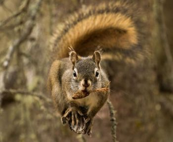 Squirrels are not only a popular small-game animal in the Carolinas, they can be a distant early warning system for hunters that deer are entering an area.