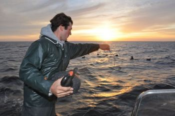 Jennings Rose sets out long-line rigs filled with scoter decoys for Pamlico Sound sea ducks. He attaches decoys to the rig using a monofilament loop.