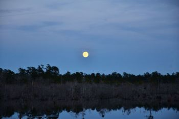 Pay careful attention to lunar activity charts this month to catch deer moving.