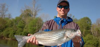 Cool to cold weather brings out the best in landlocked stripers as they move into out of deep water.