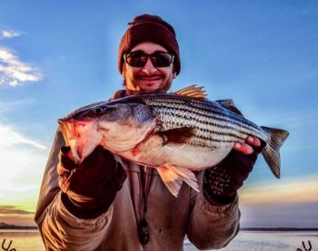 Albemarle Sound stripers provide plenty of action for anglers in December, especially if they're schooling in open water.