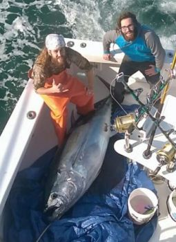 Trolling a mile off the beach helped this Southport, NC crew land the 92-inch bluefin tuna shown here.