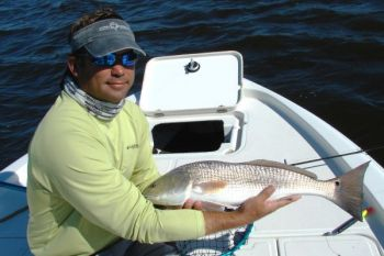 Guide Mark Stacy uses oily baits in winter to spread scent in the water and attract cold-loving redfish like this one.