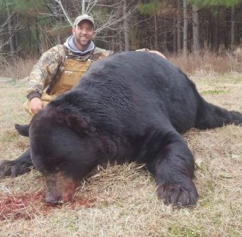 This big black bear was 15 feet away when Michael Taylor of Raleigh first saw it in an Edgecombe County, NC swamp thicket.