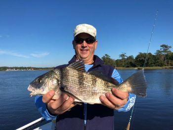 Winter weather doesn't bother black drum too much, especially in the ICW  near Little River, S.C.
