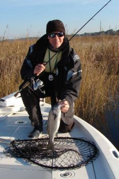 Stripers move into Wilmington's three rivers around Thanksgiving and stay into the spring.