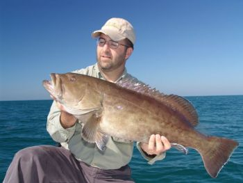Grouper like this nice scamp are well within reach of most Murrells Inlet boats when the season opens on May 1.