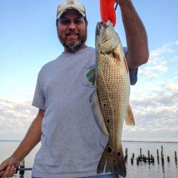 Lipless crankbaits are good for bringing in saltwater predators like redfish.