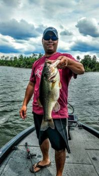 Jaime Fijardo said Shearon Harris Lake bass will gang up on main-lake points this month, feeding up after the post-spawn period ends before the summer doldrums arrive.