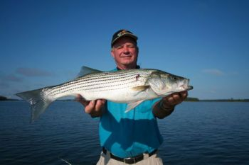 Guide Billy Murphy said the June striper and hybrid bite on Clarks Hill Lake doesn't last very long in the morning, but it can be awesome before the fish shut own.