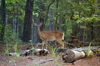 One of the proposed rules changes seeks to clarify some deer hunting regulations.
