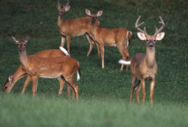 free, 2.5 hour wildlife management workshop on whitetail deer will