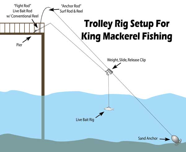 Best pier fishing rig pictures to pin on pinterest thepinsta for Best pier fishing rod