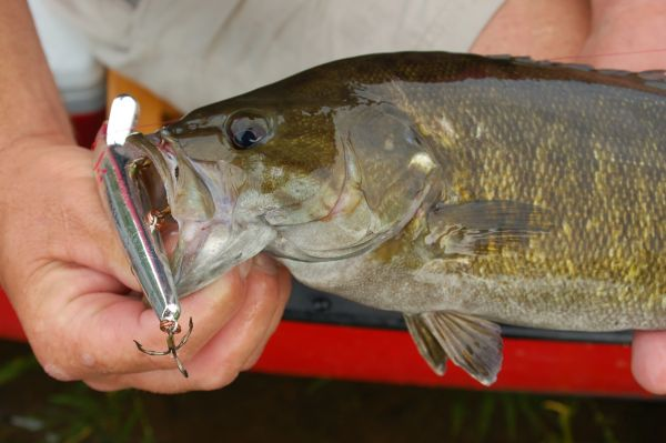 hot lures and hottest fly for smallmouth bass - carolina sportsman, Hard Baits