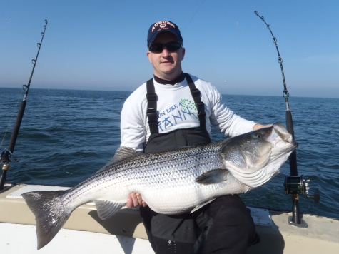 Striped bass fishing breaks out at rudee inlet virginia for Rudee inlet fishing report