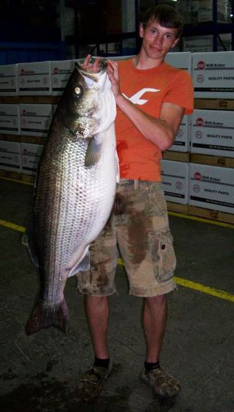 Hiwassee lake produces another state record striped bass for Striper fishing nc