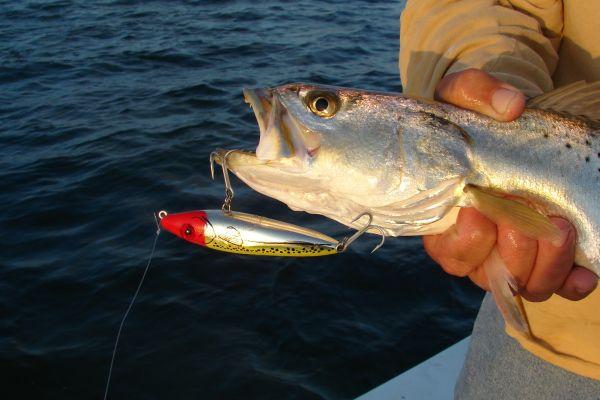 Speck ulating around roanoke island carolina sportsman for Best trout fishing in nc