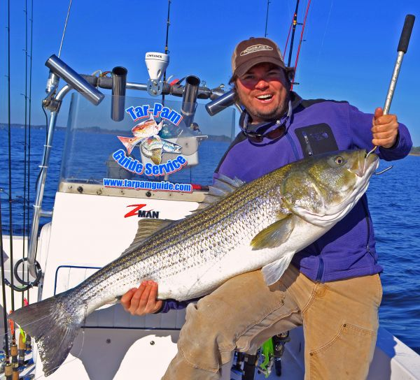 Pamlico sound spits out 50 pound striper carolina for Striper fishing nc